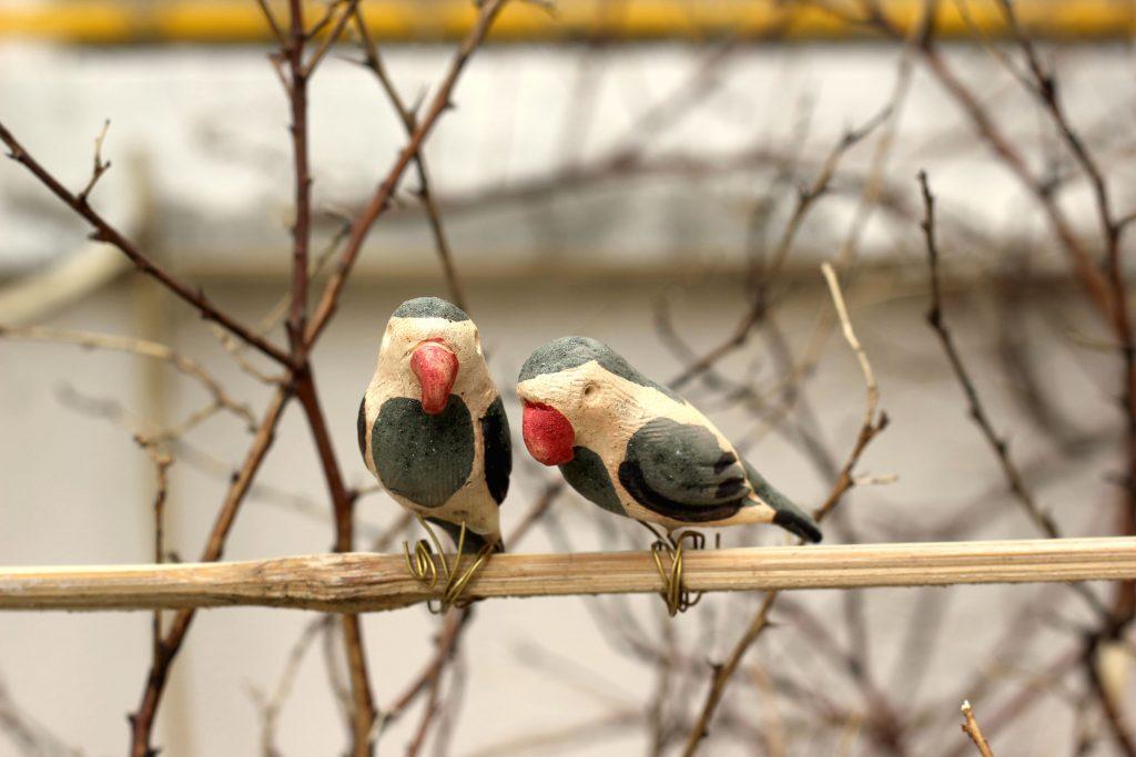 parrots-low-res